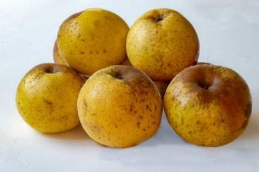 Pomme Reinette d'Armorique