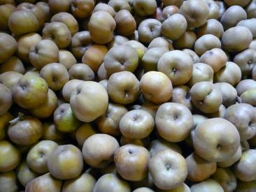 Pomme Patte de Loup